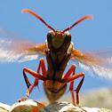 Vespa - wasp