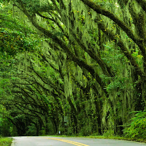 Enjoy the ride... by Reshmid Ramesh - Transportation Roads ( oaks, green, lanscape, trees, road )