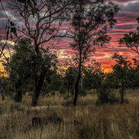 Sunset in the Bush by Mihail Marzyanov - Landscapes Sunsets & Sunrises