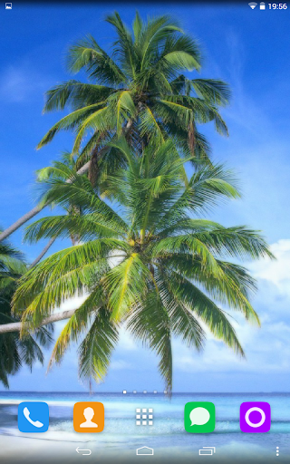 Palm Live Wallpaper