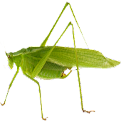 Crickets and More Ringtones