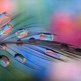 feather & drops by Hale Yeşiloğlu - Abstract Macro ( abstract, macro, drop, drops, feather, multicolored,  )