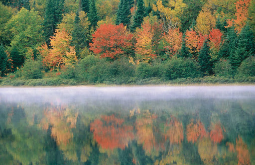 Fall colors and a morning mist hover over a lake in Parc national du Mont-Tremblant, Quebec.