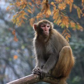 View point by Gareth Taylor - Animals Other Mammals