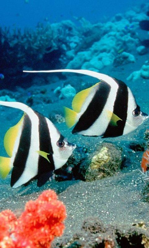 Coral Fishes Live Wallpapers - screenshot