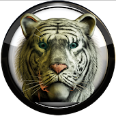 Poweramp skin white tiger