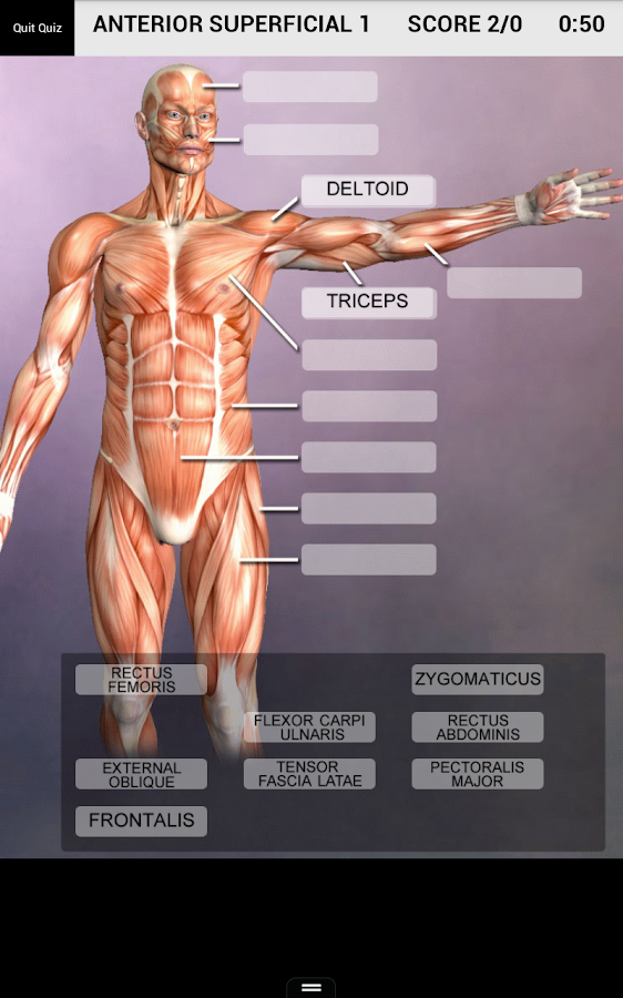 muscle and bone anatomy 3d - android apps on google play, Muscles