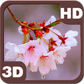 Rain Drizzles Cherry Branch HD