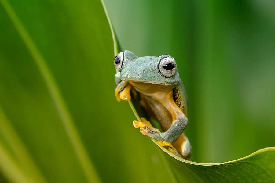 the curve by Dikky Oesin - Animals Amphibians ( curve, nature, frog, green, amphibian, morning )