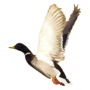 Tải Duck Call Free APK