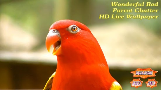 Wonderful Red Parrot Chatter- screenshot thumbnail