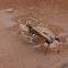 Cricket bathing