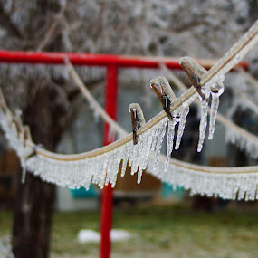 Icy Line by Teresa Delcambre - Landscapes Weather ( winter, cold, pole, ice, snow, clothes pins, pretty, clothes line )