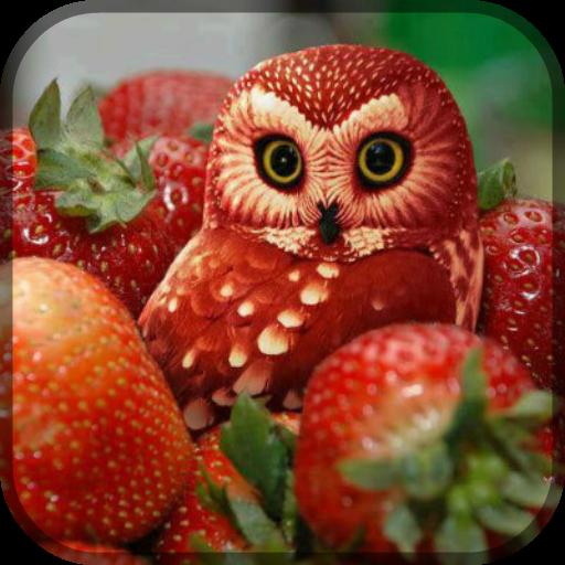 Star Chef Fruit Game LOGO-APP點子