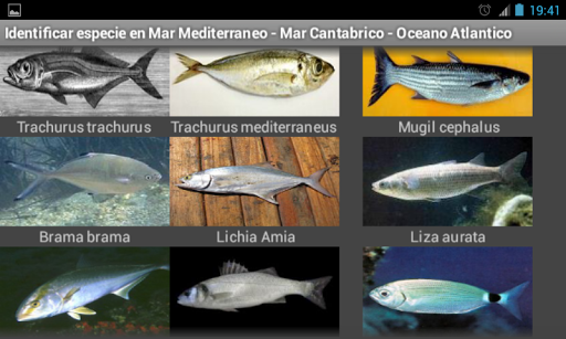 玩工具App|海の魚や水産免費|APP試玩