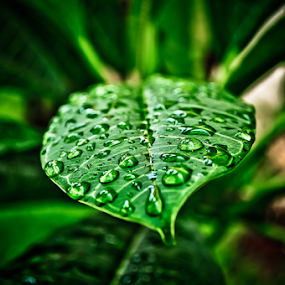 Folha by Thiago Silva - Nature Up Close Leaves & Grasses ( nature, green, close,  )