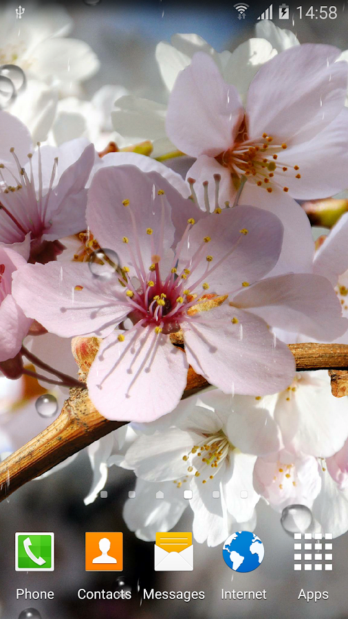 Cherry Blossom Live Wallpaper - Android Apps on Google Play