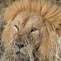 Wild Animals 1 FREE icon