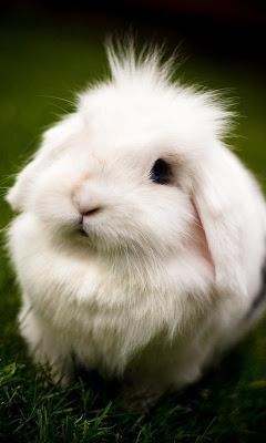 Rabbit wallpaper - screenshot
