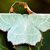 Sussex Emerald