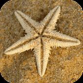 Sea Star Live Wallpaper