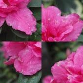 Photo Puzzle - Flowers (free)