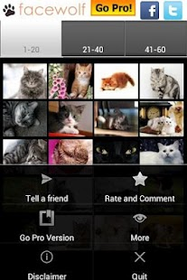 Cats Wallpapers - screenshot thumbnail