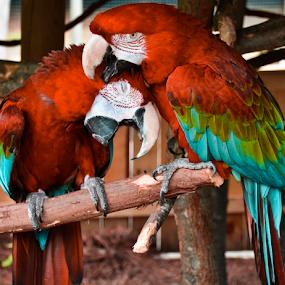 by Carlo Resty Sunga - Animals Birds ( #GARYFONGPETS, #SHOWUSYOURPETS,  )