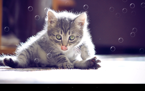 Funny Cat Live Wallpaper 2.1 screenshots 7