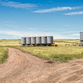 Silos by Tony Buckley - Landscapes Prairies, Meadows & Fields ( silos, farmng, harvest, rural )