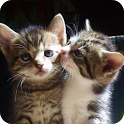 Cats Pictures and GIFs icon