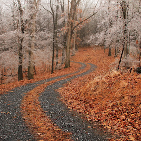 Frozen by Aaron Shaver - Landscapes Forests ( mood, forest, road, frozen, landscape, winter, nature, autumn, color, freeze, ice, path, trees, weather, rain,  )