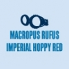 Marcropus Rufus Imperial Hoppy Red