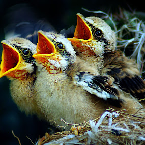 by Abhi Yasa - Animals Birds