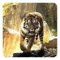 Tigers Live Wallpaper icon