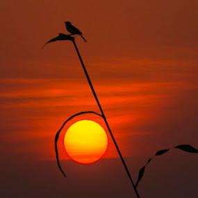by Mukesh Chand Garg - Landscapes Travel ( , #GARYFONGDRAMATICLIGHT, #WTFBOBDAVIS )