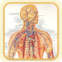 Lymphatic System icon