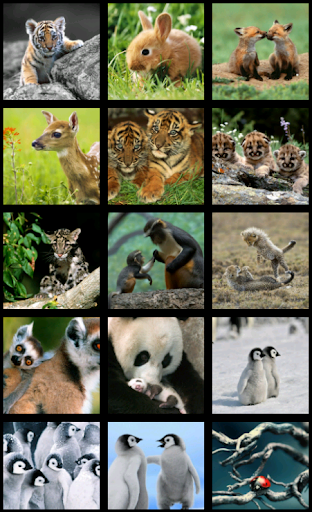 Baby animals HD Wallpapers