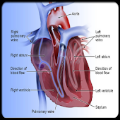 Surgical related cardiac risk