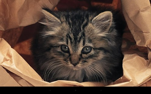 Q 貓咪動態桌布 免費
