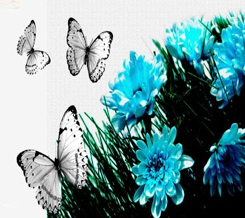 玩娛樂App|Butterfly Wallpapers Share免費|APP試玩