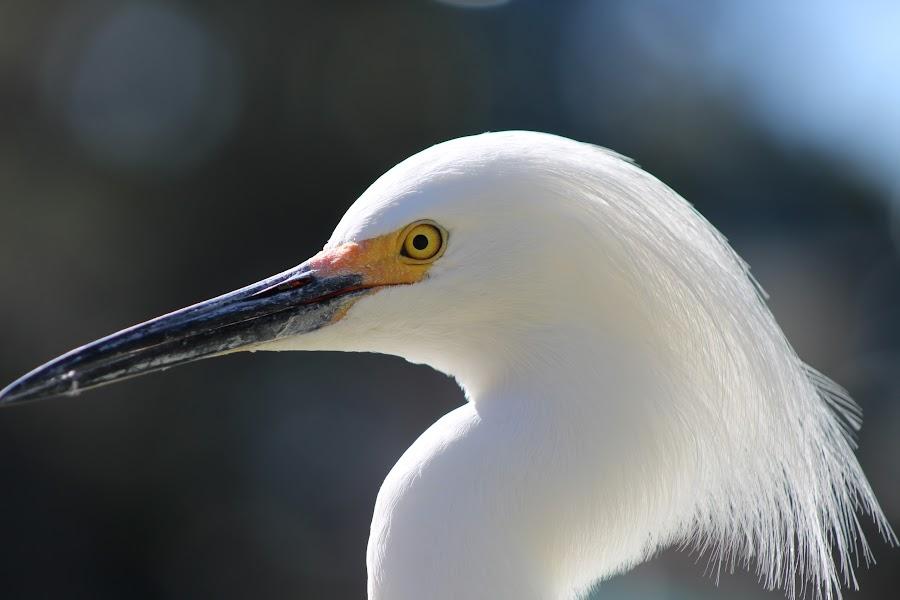 Highlights by Kimmarie Martinez - Animals Birds ( bird, stork, white, feathers, egret,  )