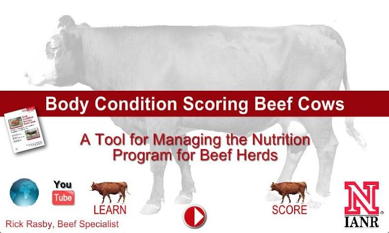 Body Condition Score Beef Cows Screenshot