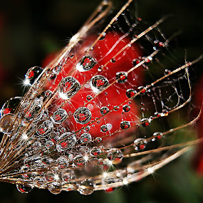 True Love And Friendship... by Marija Jilek - Nature Up Close Natural Waterdrops ( love, nature, seed, goat-beard, plants, friendship, natural waterdrops, red heart, selective color, pwc )
