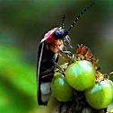 Lightning Bug (Firefly)