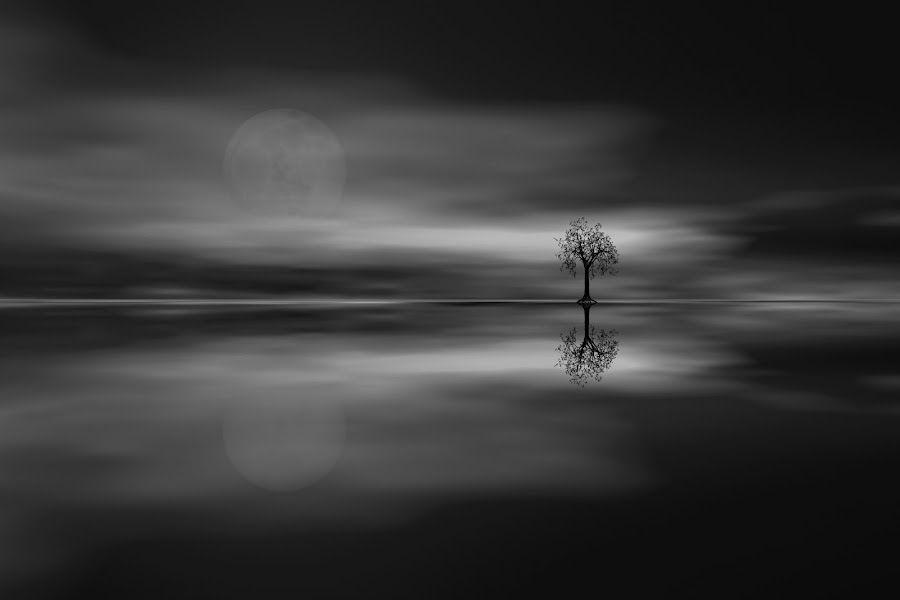 Grey Mood by Per Christiansen - Black & White Landscapes ( moon, reflection, tree, black and white, grey )