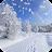 Winter Snow Live Wallpaper logo