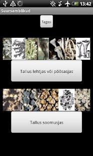 Eesti epifüütsed suursamblikud - screenshot thumbnail