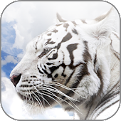 White Tiger Wallpapers HD