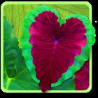 Heart Life LWP icon